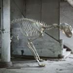 Depresivni skeleti