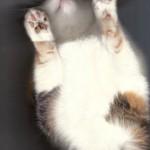 Imate mačku? Imate skener?  %Post Title