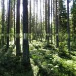 Isečena šuma  %Post Title