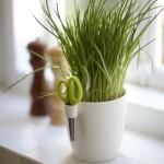 Kuhinjske biljke  %Post Title