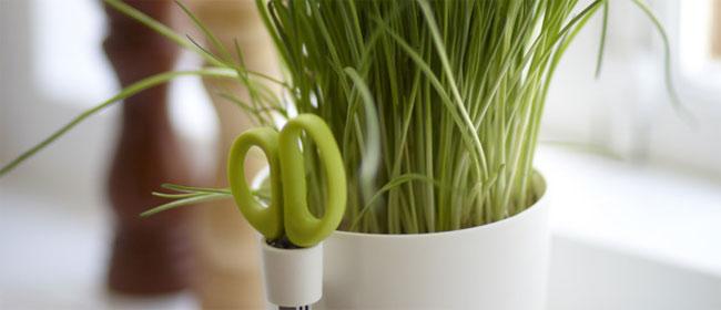 Kuhinjske biljke