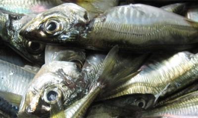 Riba u belom vinu  %Post Title