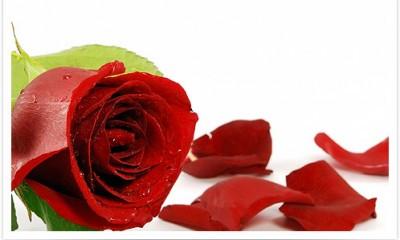 Svemirsko cveće za Dan žena  %Post Title