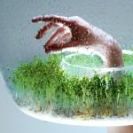 Zeleni luster