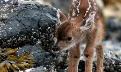 Preslatki bambi