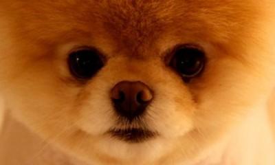 Najslađi pas na svetu