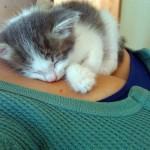 Grudi i mace