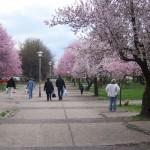 Proleće stiže u moj grad  %Post Title