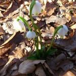 Proleće stiže u moj grad