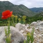 Jabra: Prolećni foto konkurs