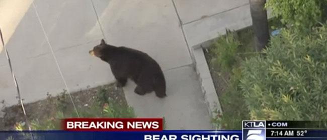 Medved u komšiluku