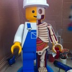 Lego anatomija  %Post Title