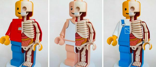 Lego anatomija