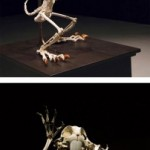 Animirana anatomija