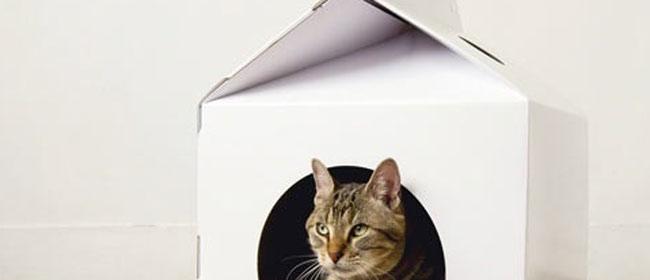 Kutija za mačke
