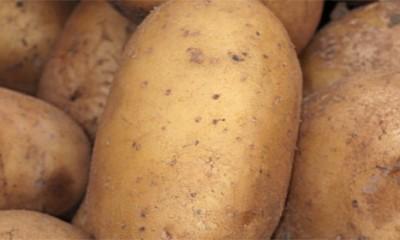Pire od krompira sa sirom