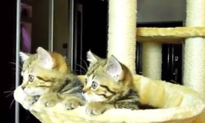Mace gledaju tenis