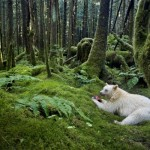 Najbolje fotografije divljine