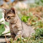 Zašto toliko obožavamo kuce i mace?