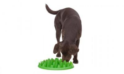 Zašto je ovo najbolji pseći poklon