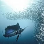 Podvodni svet