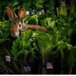 Sulude fotke sa životinjama