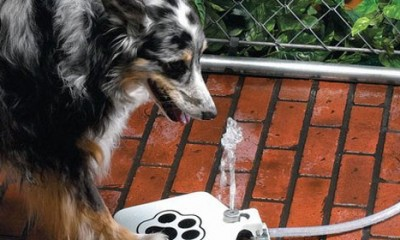 Obradujte vašeg psa