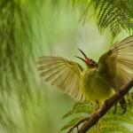 Prelepe fotografije prirode