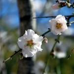 6 razloga zbog kojih volimo proleće