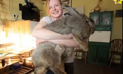 Najveći zec na svetu!