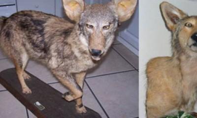Najgore preparirane životinje IKAD