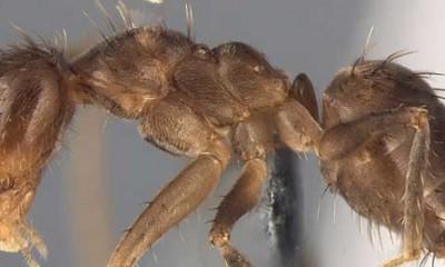 Ludi mravi jedu instalacije  %Post Title
