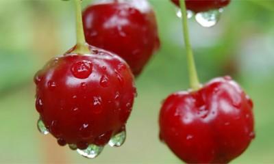 Zašto da jedete trešnje?  %Post Title