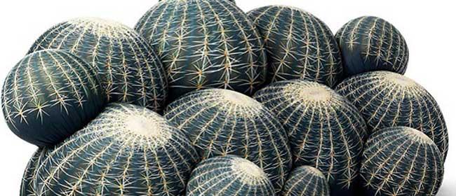 Hajde da sednemo na kaktus
