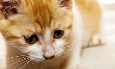20 životnih lekcija koje bi trebalo da naučimo od mačaka