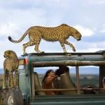 Najbolje fotografije National Geographic
