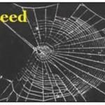 Uticaj narkotika na paukove  %Post Title