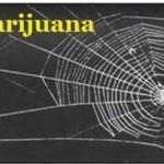 Uticaj narkotika na paukove