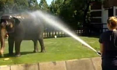 Kako se rashlađuju životinje u Zoo vrtu