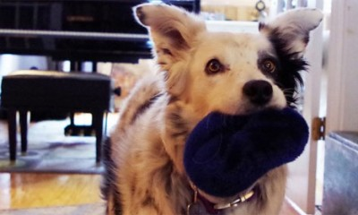Ovo je najpametniji pas na svetu  %Post Title