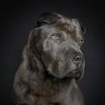 Fantastični izrazi psećih faca
