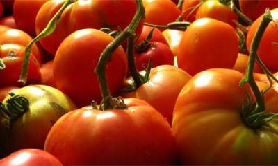 Kako da prepoznate dobar paradajz?
