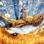 Beba veverice je nešto najslađe što ćete danas videti  %Post Title