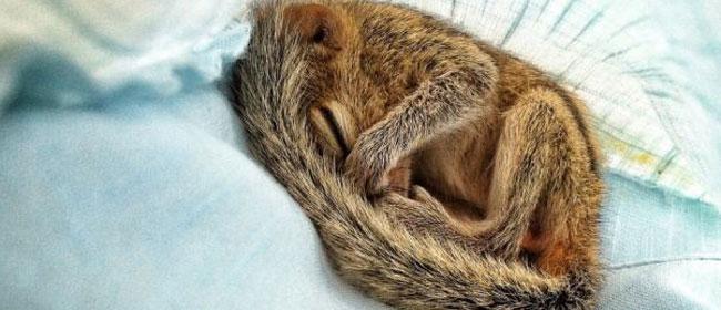 Beba veverice je nešto najslađe što ćete danas videti