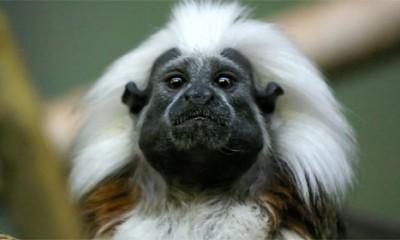 I majmuni imaju tajne  %Post Title