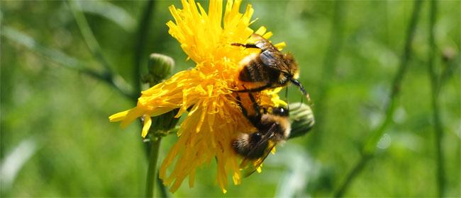 Ovo zbunjuje jadne pčele