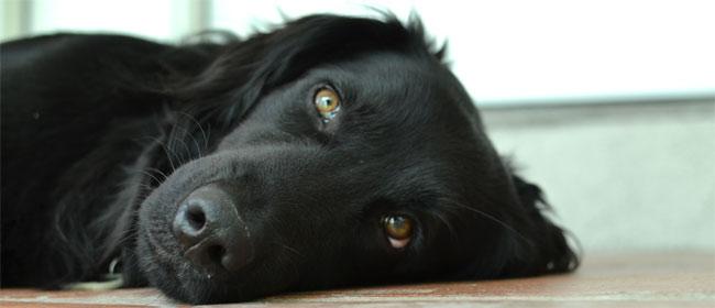 Najzad je dokazano da i psi imaju emocije