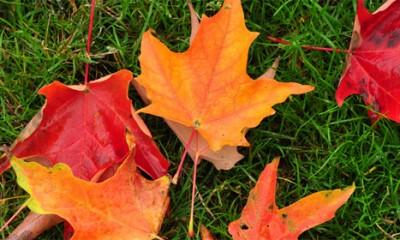 Zašto IPAK volimo jesen