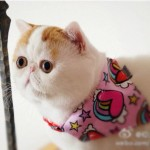 Ovo je najslađa mačka na svetu  %Post Title