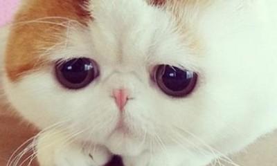 Ovo je najslađa mačka na svetu